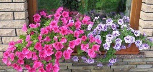 Сад на балконе - зеленый оазис