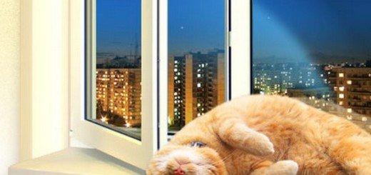 кошка на чистом окне
