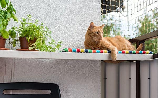 Как обустроить балкон для удобства кота