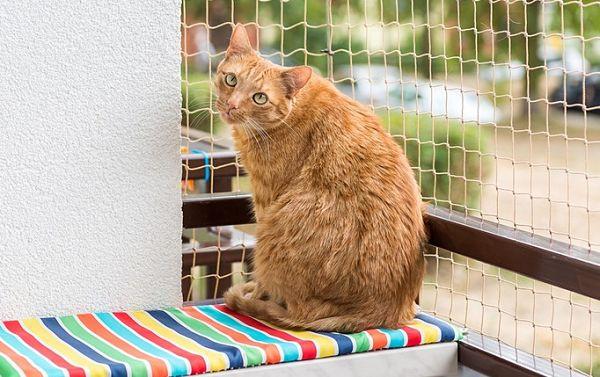Рыжий кот на балконе