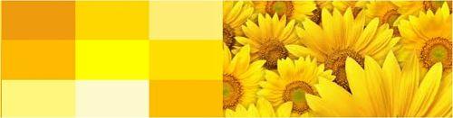 Любимый желтый цвет
