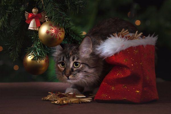 Новогодние пожелания на 2017 год  и игрушки на елке-