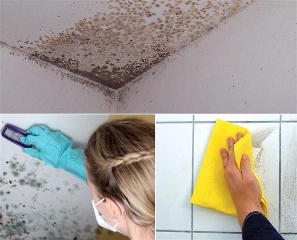 Уничтожение грибка на стенах и в ванной - ЭКО-ОБРАБОТКА
