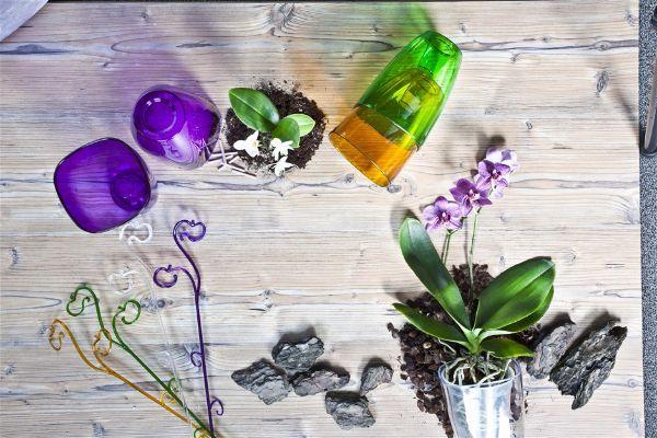 Комнатный цветок орхидея  подобрать горшки