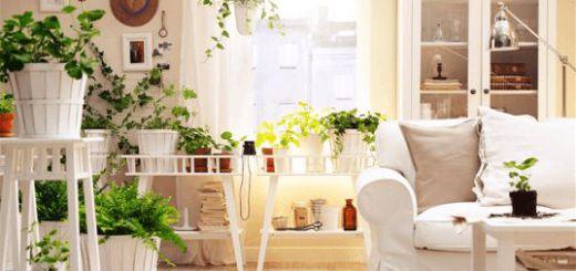Комнатные растения по фэн-шуй в интерьере