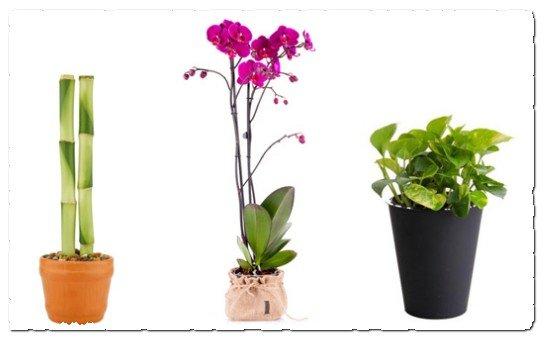 Комнатные растения по фэн-шуй