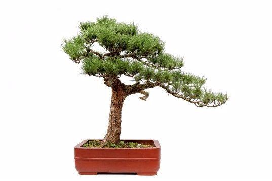 Празднуем день Земли по фэн-шуй Дерево