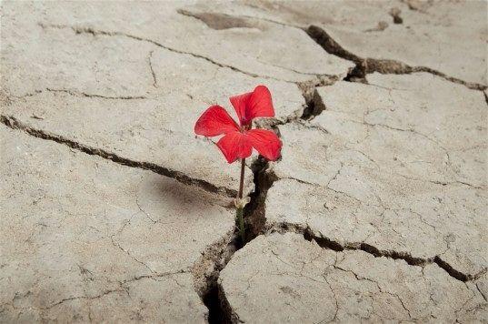 Празднуем день Земли по фэн-шуй Земля