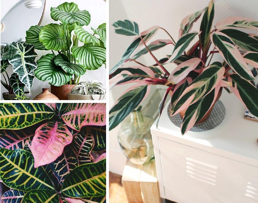 красивые листья комнатных растений