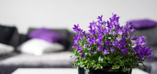 фиолетовые цветы и подушки