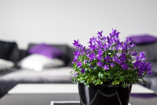фиолетоые цветочки