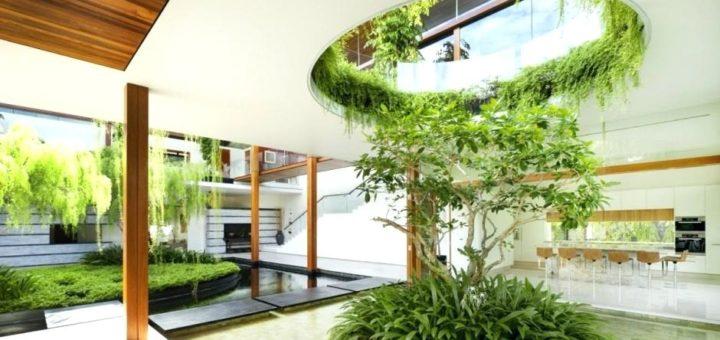 зеленые растения в офисе