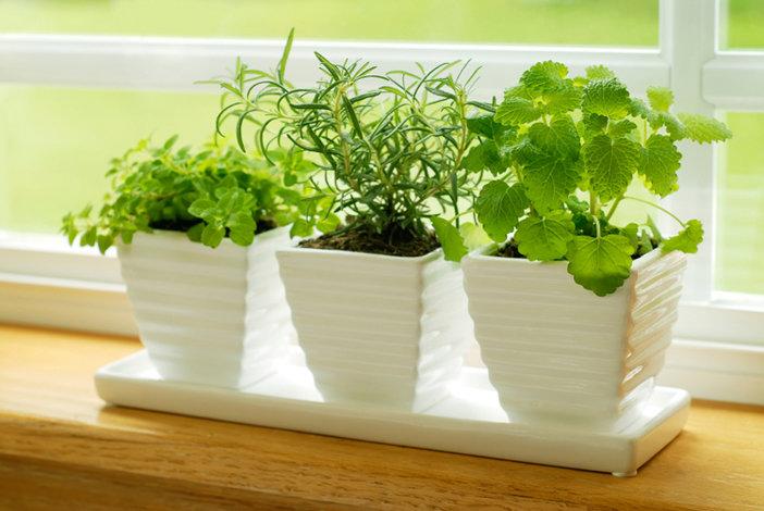 Ароматные травы и праильно подобранные горшки станут украшнеим интрьера