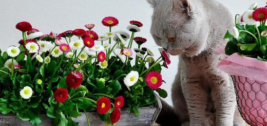 кошки и растения