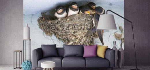 фотообои с птицами