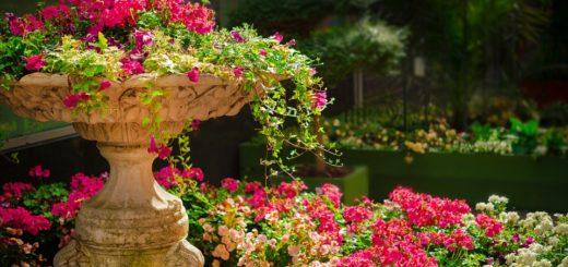 цветы в ландшафтном дизайне