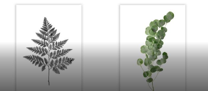 растительные мотивы
