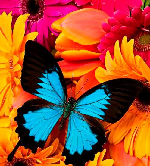 бабочка и яркие цвета