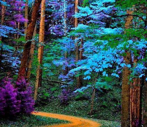синий лес