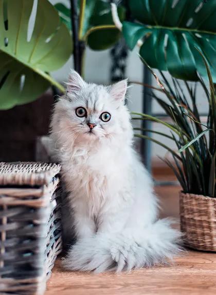 кошки и цветы