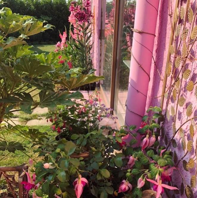 волшебный сад розового дома