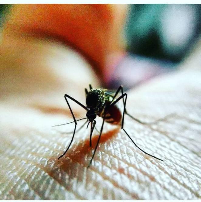 Успокаивает раны после укуса комаров